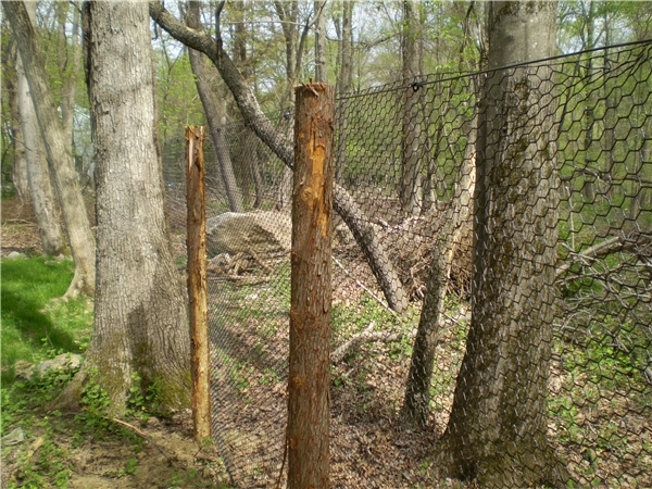 Steel Web Deer Fence