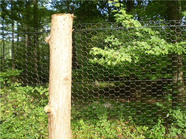 Types Of Deer Fences To Install Around Your Property